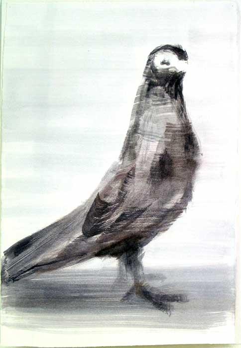 pigeon-debout-Kopie
