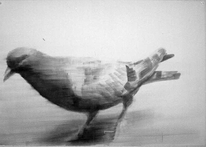 pigeon-pia-Kopie